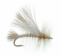 Improved Golden Stone Dry Fly